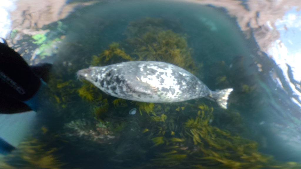 The GoPro Fusion captures a seal swimming right below Gareth