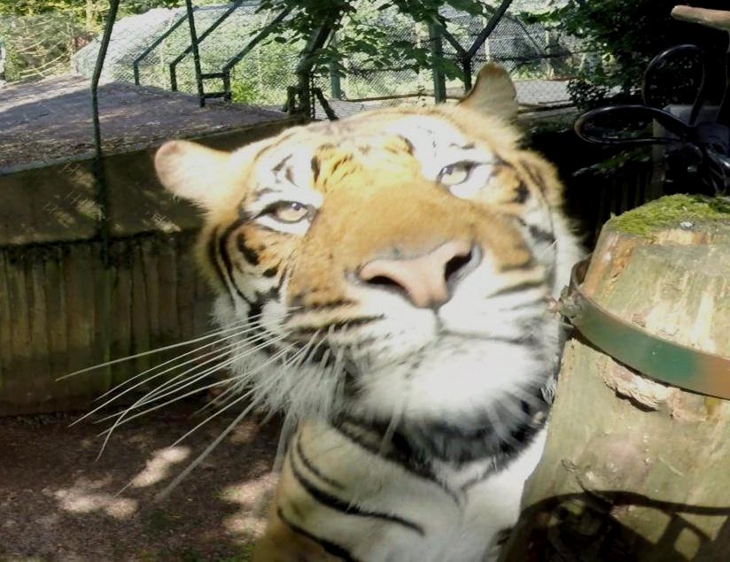Soundview filming wildlife up close with 360 VR